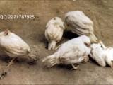 优欣-特异免疫型液态乳酸菌