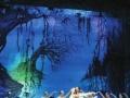 欧洲最著名俄罗斯圣彼得堡芭蕾舞团经典舞剧天鹅湖门票