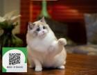 南通哪里卖布偶猫便宜 南通哪里卖布偶猫 南通哪里买布偶猫