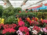 花卉绿植租赁养护