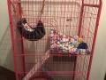 自家用的猫笼95成新