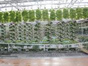 潍坊优质的无土栽培提供商_无土栽培模式