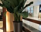 張江綠化養護租賃 綠化設計 庭院景觀 價格優惠