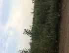河北省吴桥县有林地100亩诚招承包户
