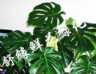绿植销售租赁 室内绿化 绿植养护 您身边的绿化专家
