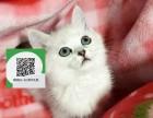 深圳哪里有蓝猫出售 深圳蓝猫价格 深圳宠物狗出售信息