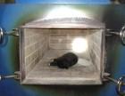 嘉定区狗狗猫咪去世怎么办安亭镇宠物殡葬电话上门接送服务