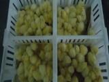 雏鸡周转筐 四格加固雏鸡运输筐 塑料鸡苗筐价格