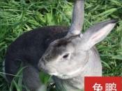 湖南养肉兔的方法