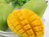 越南进口青皮芒果5斤 热带新鲜水果金煌芒 源产地直供