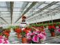 花卉大棚建设 优质花卉大棚建设上哪找