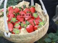 春季自驾游 推荐上海南汇农家乐 采草莓钓大鱼 划船烧烤