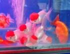 鱼缸玻璃清洗 鱼缸漏水维修 护理鱼缸
