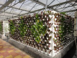 山东立体栽培公司|实惠的立体栽培哪里有