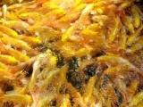 批发各类观赏鱼锦鲤金鱼红鲫鹦鹉鱼