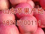 今日山东苹果价格最新山东苹果批发价格