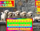 买拉拉犬来实体犬舍 疫苗做齐签协议 种公借配