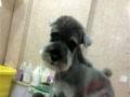 沈阳宠物美容师培训12年金牌宠物国际标准课程