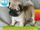 正规狗场繁殖精品巴哥幼犬 可送货上门挑父母可