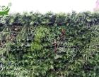 美化植物墙,立体景观绿化植物墙,植物墙厂家直销