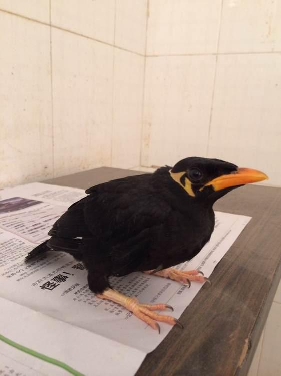 转让金太阳鹦鹉 和尚鹦鹉 亚历山大鹦鹉 超可爱会说话