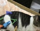 宠物猫赠送 赠送猫粮及猫用具