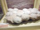北京蛋化石在哪交易最权威