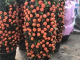 上海花店订鲜花开业花篮送花生日玫瑰鲜花