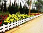 菏泽草坪护栏 花坛护栏 围墙护栏