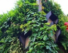 立体绿化墙可以生长的植物墙