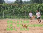 东莞较适合野炊烧烤拓展训练企业年会的农家乐喜悦之乡