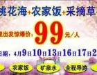 平谷桃花一日游99/人