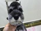 招募模特犬 免费美容