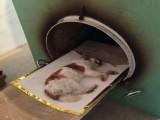 苏州昆山市动物火葬服务昆山市宠物火化电话可上门接送