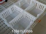 孵化场用鸡雏运输筐 育雏苗筐批发 优质塑料鸭苗箱厂家