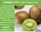 陕西武功猕猴桃产业带诚招加盟代理商(微商淘宝分销等!)