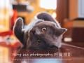 柠夏宠物摄影来啦五一特价萌宠写真季