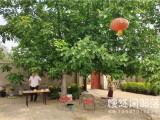 北京企業養老退休后的養老生活