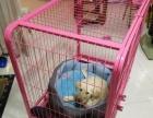 中小型犬 泰迪 金毛 狗笼子