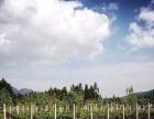 云南省昆明市石林县30亩其他园地出租