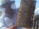 广西黎师蜂蜜500g封盖蜜买就送礼盒装 天然蜜