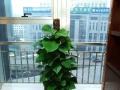 全城较低价-专业租摆各种花卉绿植、绿植批发销售