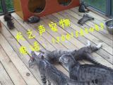珠市口家庭式宠物寄养猫猫 幸福爱居模式托管养老可接送