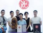 朝阳宠物行业,学校学习平台,量身打造宠物专业者