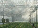 大棚蔬菜种植喷雾降温设备