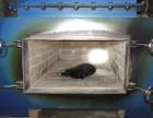 靜安區原閘北區寵物火化接收電話共和新路寵物殯葬地址上門接送