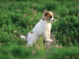 本地狗舍出售优质宠物狗 价合理有保障