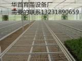河北安平华首丝网设备厂专业生产,温室苗床网,育苗床网