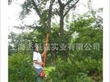 四米伸缩长杆汽油高枝锯高枝剪修枝剪日本共