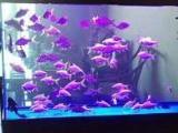清洗魚缸治療魚病魚缸維修搬魚缸賣觀賞魚